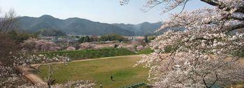 篠山城後のパノラマ桜.jpg